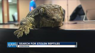 Over two dozen reptiles stolen from Kenosha home - Video