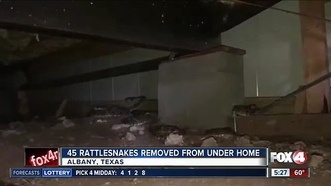 45 rattlesnakes removed from under home