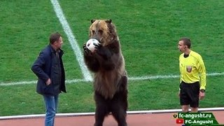 Trained Bear Kicks Off Proceedings in Russian Club Soccer Game - Video