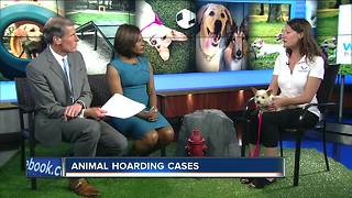 Ask the Expert: Watch out for animal hoarders - Video
