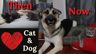 Cat and Dog | From Puppy to Dog
