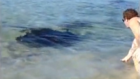 Man on Australian beach casually hand feeds gigantic Stingray