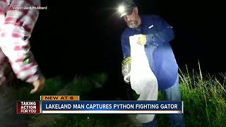 Video shows Florida man catch python as it strangles gator - Video