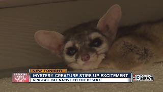 Cute creature mystery brings excitement to Henderson neighborhood - Video