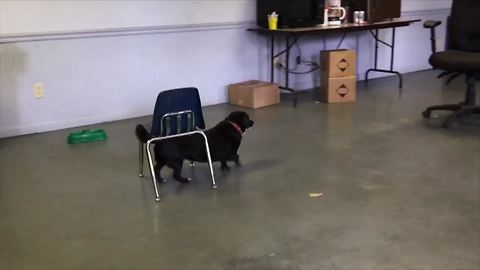 One Smart Doggo Shows Us How He Manages Things