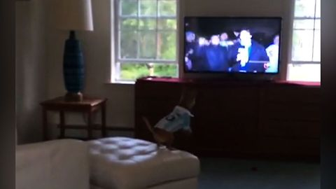 This Compilation Of Clips Shows That Dogs Love TV More Than You Do