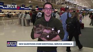 New questions over growing trend of emotional service animals - Video