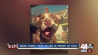 Mom: family member stabbed dog to death in front of kids - Video