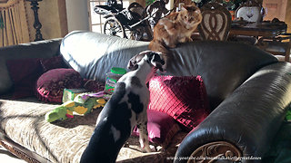 Cat discourages puppy from jumping on the sofa