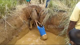 Adorable baby elephant rescued from well in Sri Lanka - Video