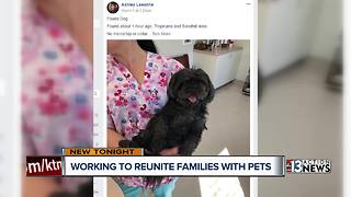 Las Vegas volunteers work to reunite missing dogs and owners - Video