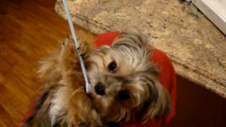 Talented Dog Brushes His Own Teeth