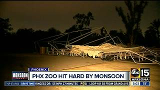 Phoenix Zoo to be closed Friday after storm damage, clean up - Video