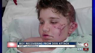 Boy Recovering From Dog Attack
