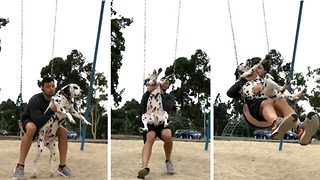 Adorable moment 'big baby' dalmatian sits on owner's lap on swing - Video