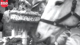 1930's News Clip: Christmas Cake for Sick Animals - Video