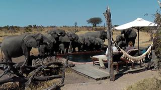 Wild Elephants Drink Water From Pool In Front Of Campers - Video