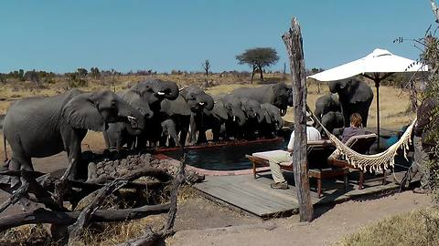 Dozen Wild Elephants Pay Surprise Visit To Campers, Quenching Their Thirst In The Pool