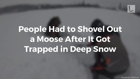 Watch: Snowmobilers Work to Rescue Unhappy Moose Buried in Neck-Deep Snow