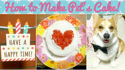 Super Easy & Cute Cake for Dog Recipe Video!