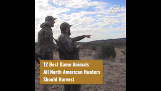 12 Game Animals All North American Hunters Should Harvest