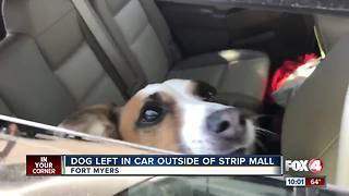 Dog found left inside a hot car at a Ft. Myers shopping center - Video