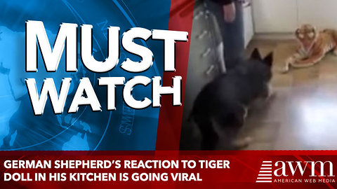 German Shepherd's Reaction To Tiger Doll In His Kitchen Is Sending The Internet Into Stitches