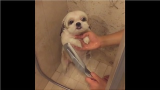 Dog's shower routine is too cute for words - Video