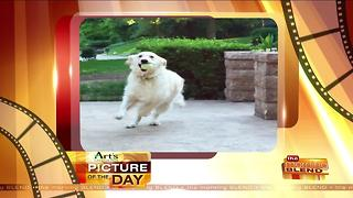 Art's Cameras Plus Picture of the Day for July 25! - Video