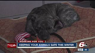 Keeping pets outdoors during extreme winter temperatures is illegal in Indiana