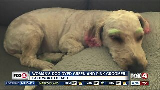Woman's dog dyed green and pink by groomer
