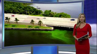 Florida's Governor responds to algae spreading across the Southwest Florida area - Video