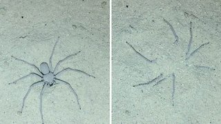 Spider Has An Ingenious Technique Of Burying Itself In The Sand - Video