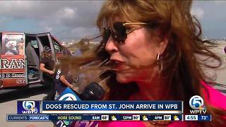 How to adopt a Kenny Chesney Rescue Dog - Video