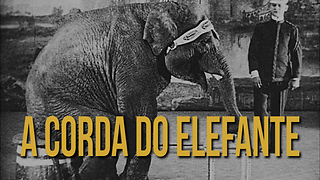 Conto: A Corda do Elefante - Video