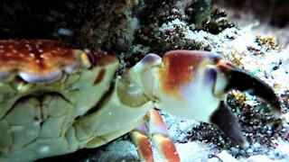 Crab steals a GoPro and makes a movie in his lair