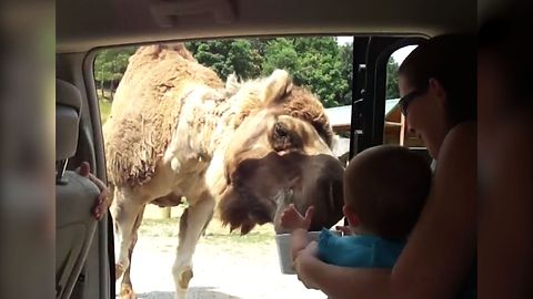 21 Hungry Camels To Help You Get Through Hump Day