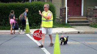 This Community Cross Walk Guard Is A Dog - Video
