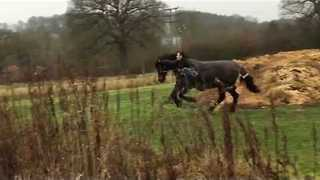 Man Uses Clever Tactic to Halt Runaway Horse - Video