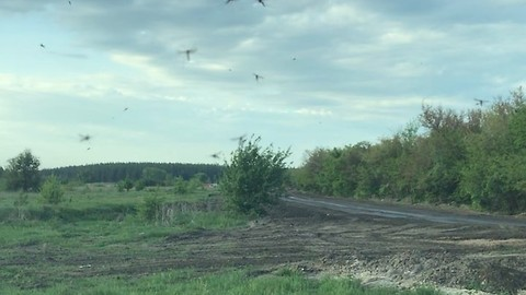 Western Russia Town Plagued by Mosquitoes