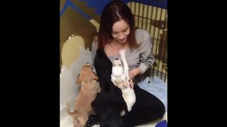 Puppy Reunites With Siblings Four Years After Adoption - Video