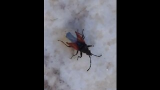 Shocking Dangerous insects walking in my garden