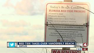 Red Tide takes over Vanderbilt Beach - Video