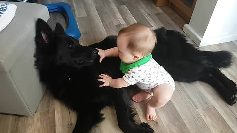 Patient dog plays with overly-attached baby