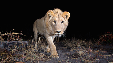 Hidden Camera-trap Captures Rare Pictures Of Elusive African Animals