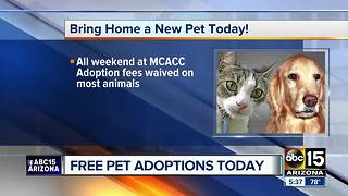 Free pet adoptions this weekend in Valley! - Video