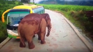 Wild elephant attacks broken down coach - Video