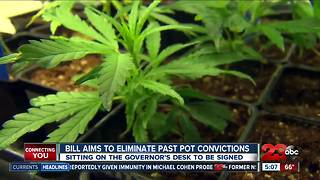 Cannabis convictions - Video