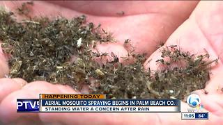 Palm Beach Co. to begin aerial spraying for mosquitoes - Video