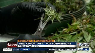 Preview: Pot franchises are a growing business